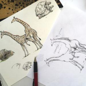 Drawing of giraffes